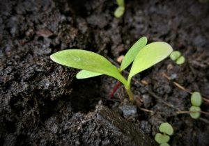 Samen der Veränderung